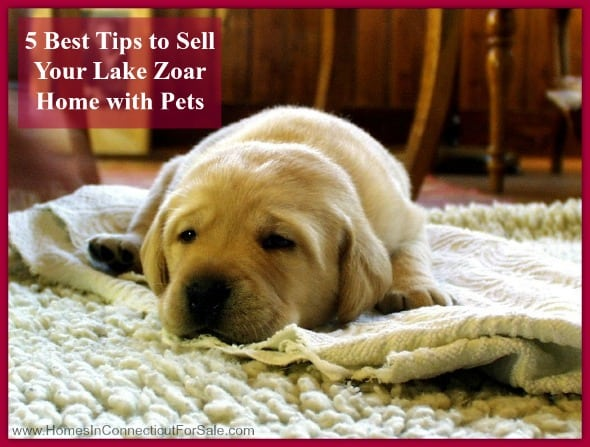 Sell your Lake Zoar real estate property with pets in a breeze by following these 5 tips.